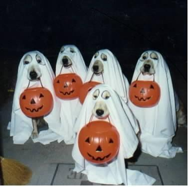Halloween_doggies