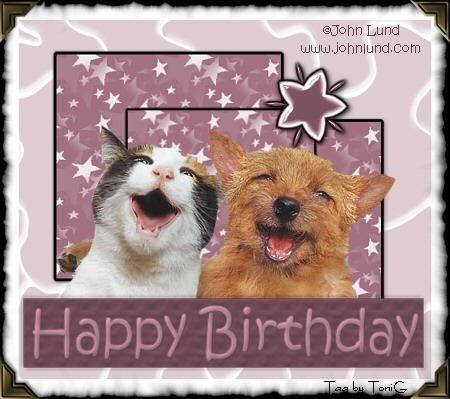 Birthday420cat20and20dog2020bitsy