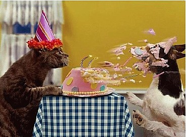 Cat_birthday_3