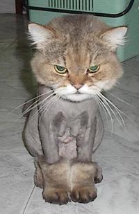 Cutestcat1