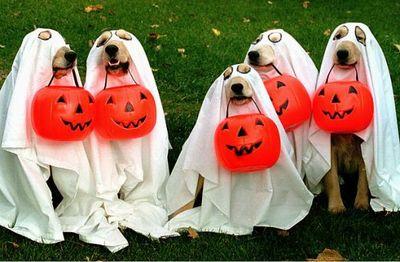 Halloween_dog2