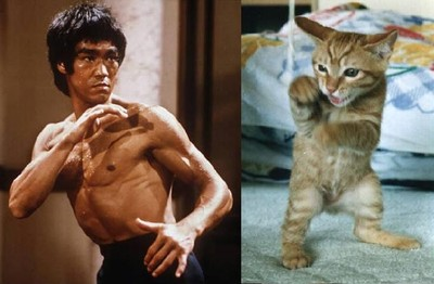 Lee_vs_kitty