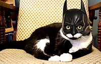 Batmanmaskforcats