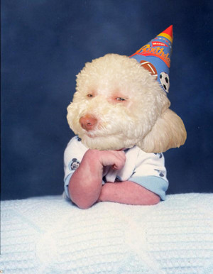 Birthdaydogbaby