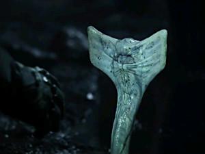 Prometheus_worm