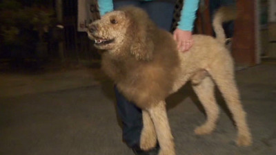 Moosliondog