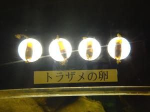 P1053251