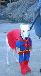 Super_dog